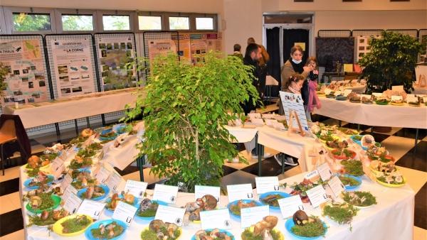 'Mycologie et Botanique' a investi le weekend dernier la Maison des Syndicats