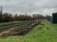 Un très important abattage d'arbres qui interroge sur l'agglomération chalonnaise
