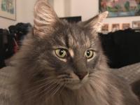 Un appel à l'aide lancé par Milo qui a perdu son chat rue Général Leclerc à Chalon