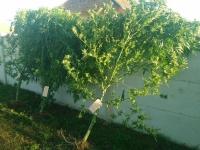A Ouroux sur Saône, il cultivait ses pieds de cannabis en serre