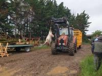 Deux troupeaux de brebis attaqués la nuit dernière à Cortevaix dans le Clunisois