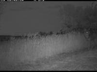 Nouvelles analyses de l'OFB: la présence du loup dans le Clunisois confirmée, le «plan loup» déclenché