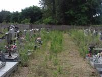 Un verdissement du cimetière de Saint-Rémy pas très apprécié