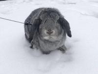 Même nos amis les animaux mis à l'honneur aux couleurs de la neige