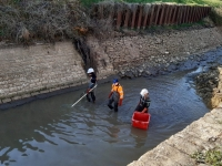 200 kg de poissons sauvés d'une mort certaine dans le canal du Centre