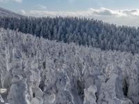 EN IMAGES - Connaissez-vous les monstres de glace de la montagne Zao ?