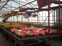 FLEURS/Plants de légumes - Passez commandes auprès des Jardins de Virey