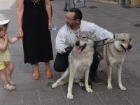 Venez à la rencontre des loups sur le marché artisanal médiéval rue aux Fèvres