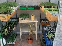 Création d'une bourse d'échange de graines, plantes et végétaux