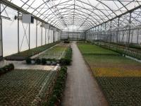 Horticulture et maraîchage, de nouvelles serres à l'Atelier des PEP de Châtenoy-le-Royal