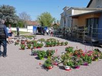 Marché aux fleurs et aux plants potagers du Foyer Saint Joseph