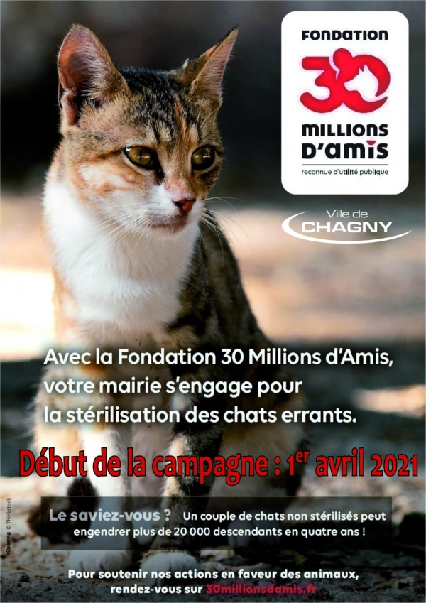 Bientôt une nouvelle campagne de stérilisation des chats errants à Chagny