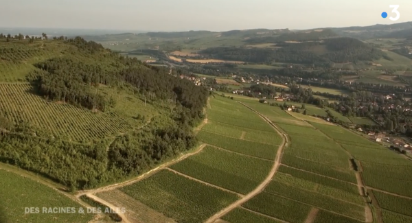 Les Terres de Bourgogne à l'honneur ce mercredi soir dans Des Racines et Des Ailes