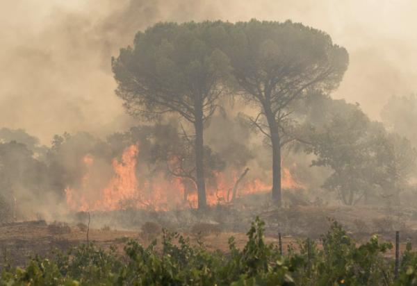 Le feu n'est toujours pas maîtrisé dans le Var après 4000 hectares brûlés
