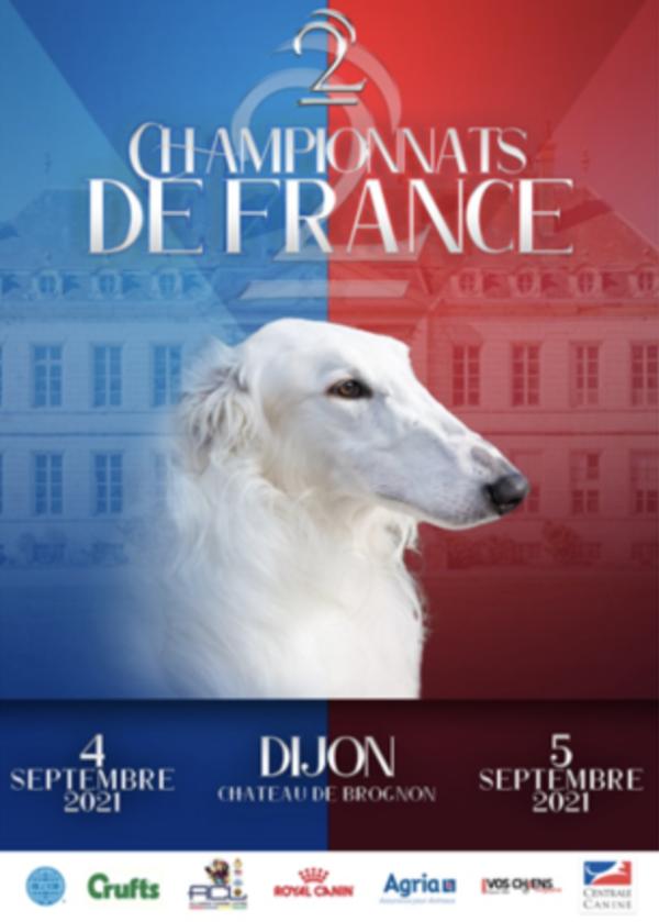 Plus de 10 000 chiens en lice pour le prestigieux Championnat de France du Chien de race