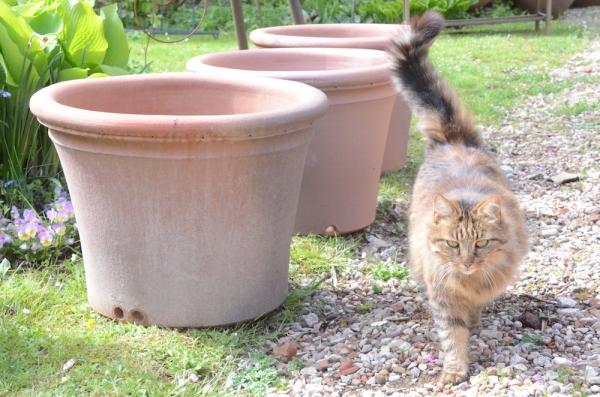 Sampigny les Maranges vous accueille autour des pots, des fleurs et des paniers de jardins !