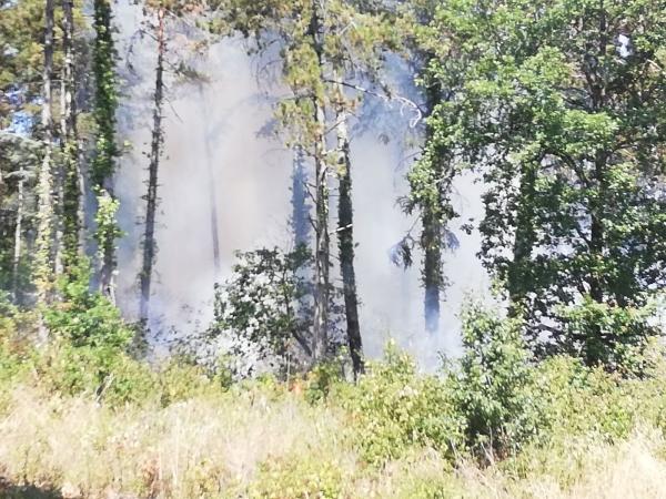 Nouveau feu de forêt sur les hauteurs de Mercurey