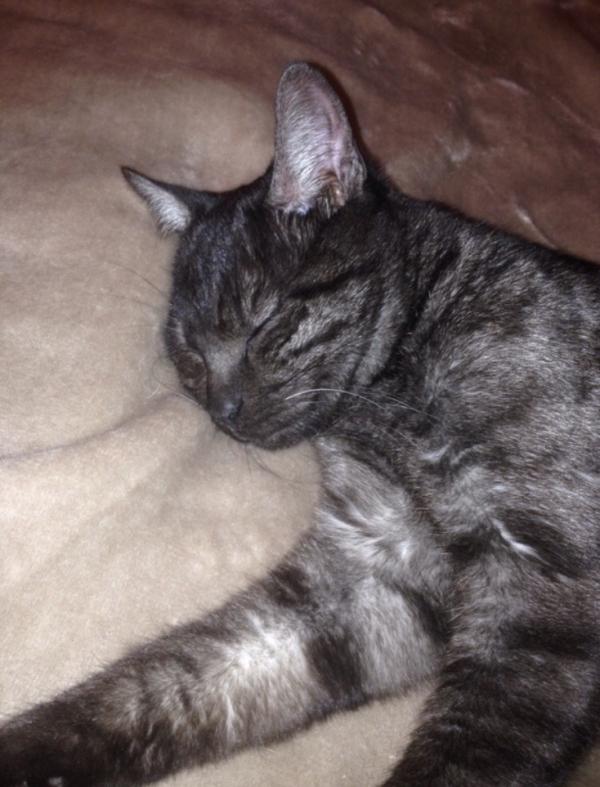 Trouvé en décembre région Barizey jeune et joli chat gentil