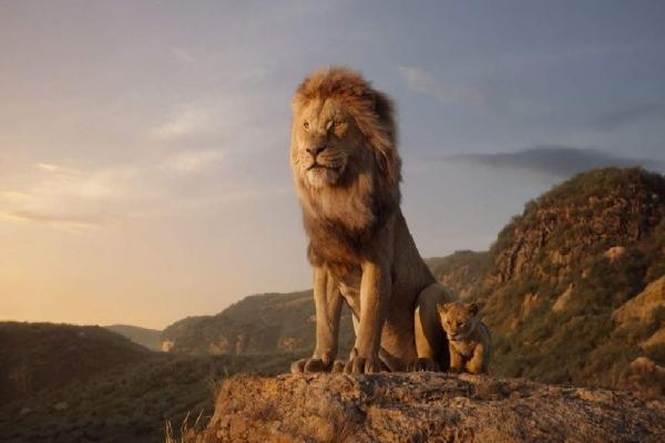 Ciné sous les étoiles : plus de 800 personnes pour «Le Roi Lion» au Plateau Saint-Jean