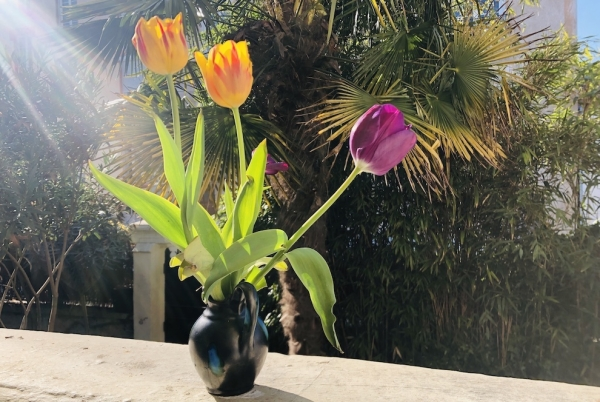 Les fleurs de l'espoir… Silence, ça pousse !