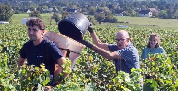 Les vendanges ont commencé dans le vignoble givrotin